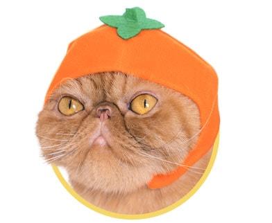 かきをモチーフにした猫用のかぶりもの
