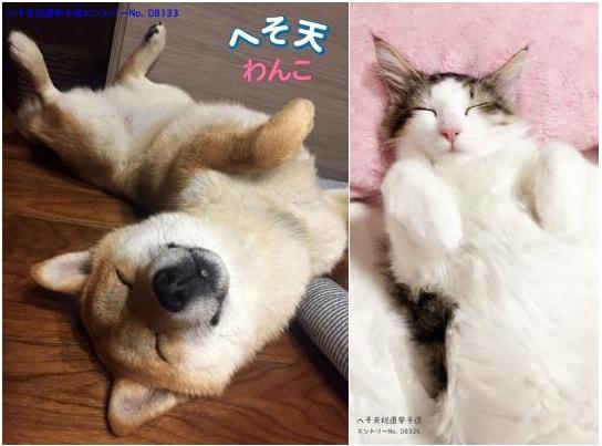 犬と猫の「へそ天」写真