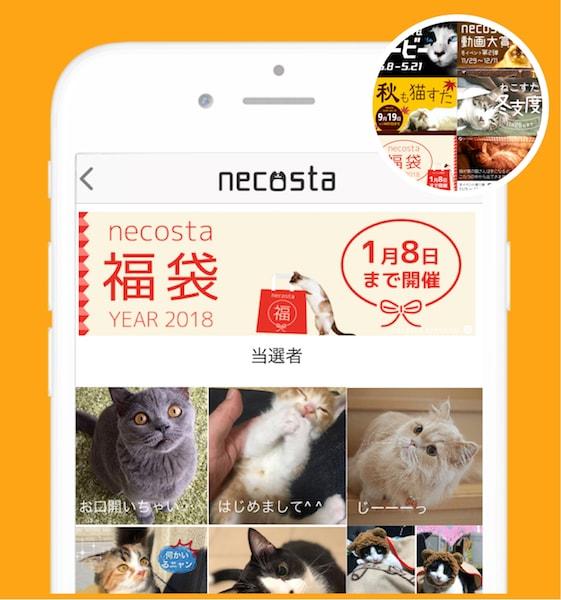 プレゼント企画イベントの実施イメージ by 猫好き専用のSNSアプリ「ねこすた」