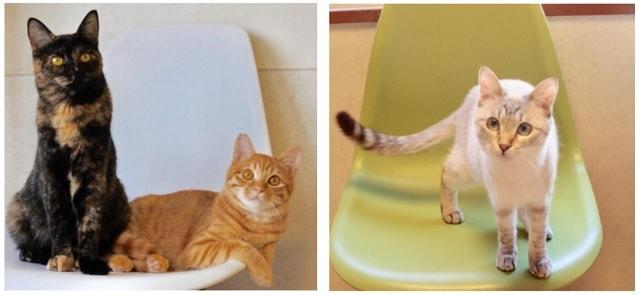 江戸ねこ茶屋の猫スタッフたち