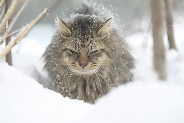 雪の中で佇む猫の写真 by 熊谷忠浩
