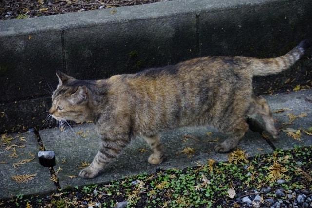 生活環境を棲み分けたり、異性を探す猫のイメージ写真