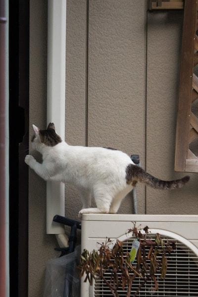 必死すぎる猫の写真 by 沖昌之