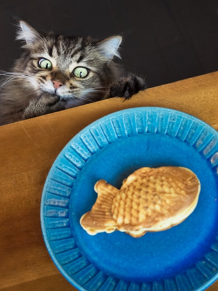 たい焼きを狙う猫の写真 by MARCO
