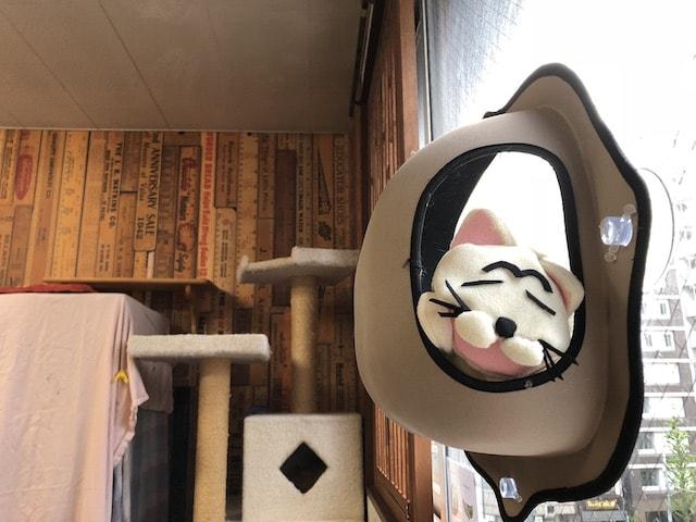 窓から外を眺められるネコ飼育可物件