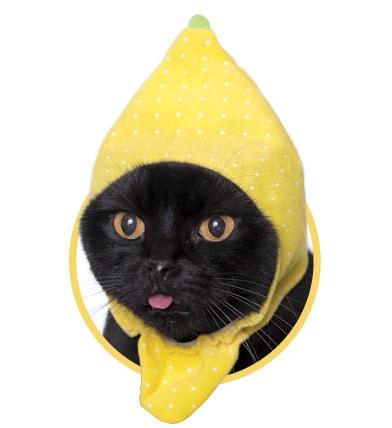 レモンをモチーフにした猫用のかぶりもの