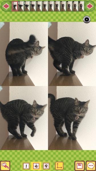 シャッターを押した前後の写真も取れる猫専用のカメラアプリ「撮る猫」