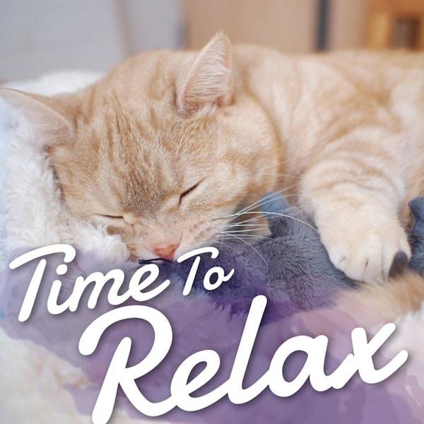 人気猫「ぷーちゃん」がジャケット写真の洋楽アルバム「Time To Relax~くつろぎタイムに聞きたい癒しの洋楽~」