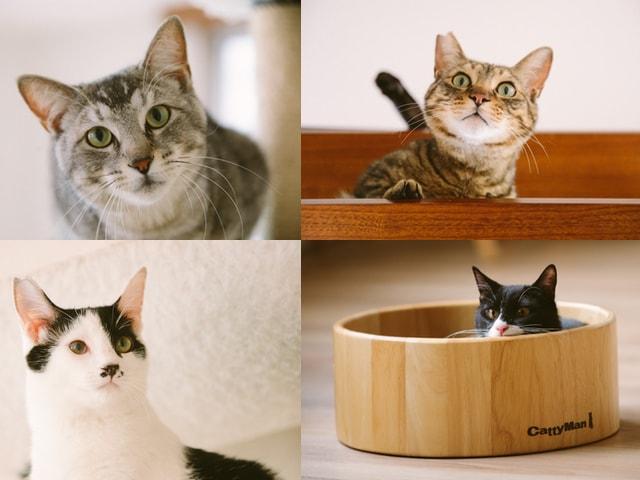 江戸ねこ茶屋で触れ合える猫スタッフたち