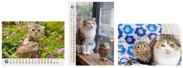 ローソンプリントで印刷できる、フクとマリモの子育て写真&カレンダー