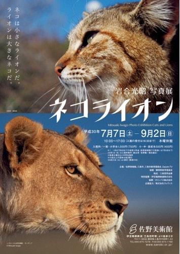 岩合光昭 写真展「ネコライオン」が静岡・佐野美術館で7/7〜開催