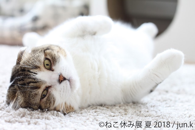 人気猫・どんぐりの写真 by junk