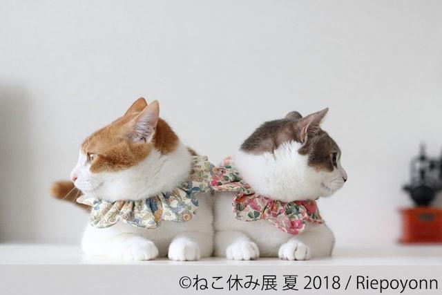 双子猫のアメカヌちゃん by riepoyonn
