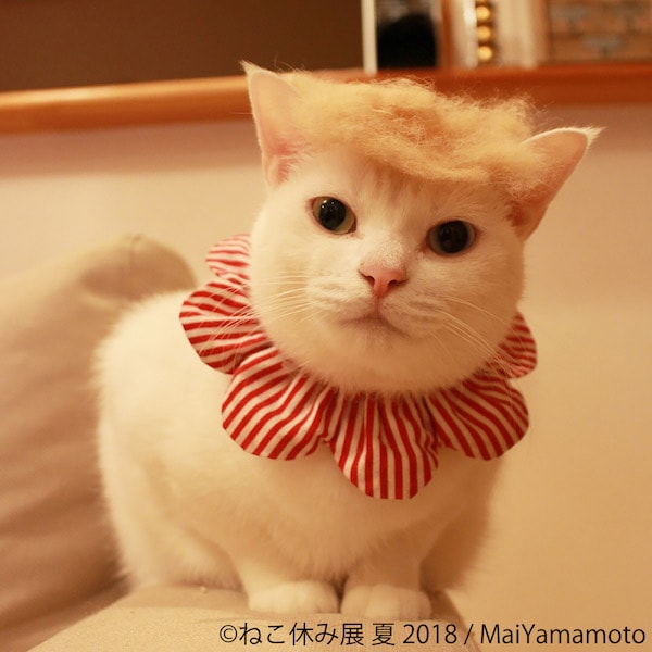 トランプヘアの猫 by MaiYamamoto