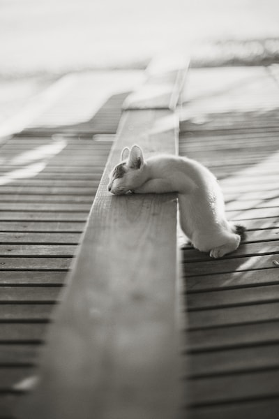 モノクロームで撮影した猫 by ねこ写真家・関由香