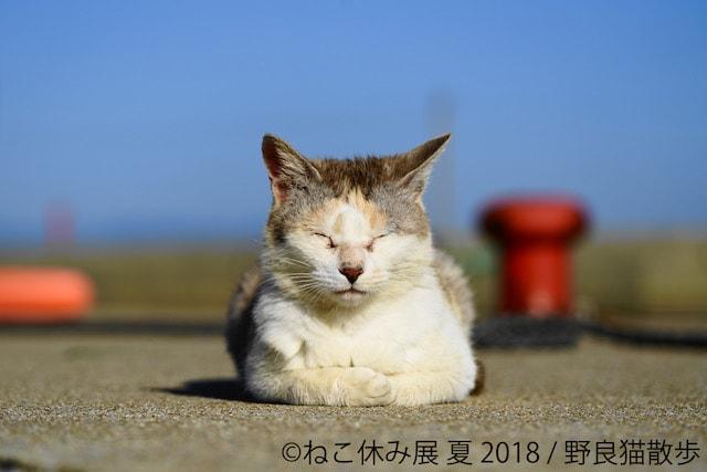 香箱座りで眠る猫 by 野良猫散歩