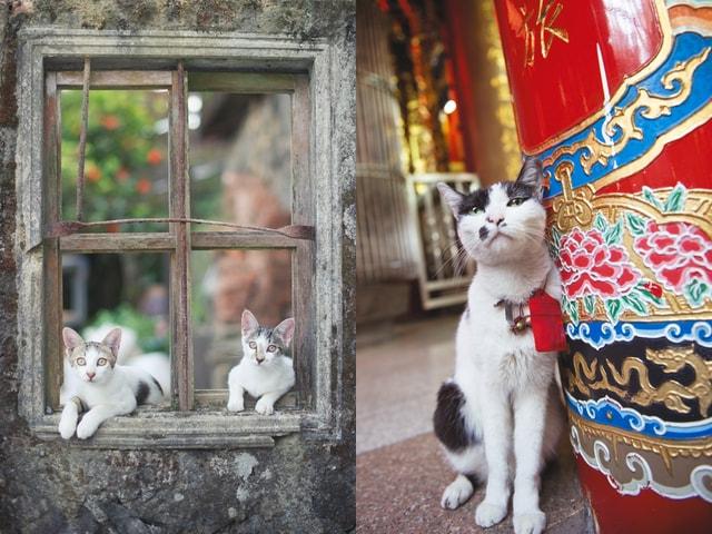 台湾のネコ写真に癒やされる♪ ねこ写真家・関由香さんの写真展が7/29まで開催中