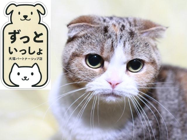 奈良市が犬猫パートナーシップ店制度を開始、殺処分ゼロを目指し基準を満たした業者を認定