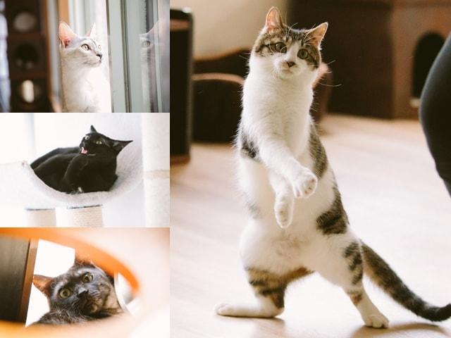 猫スタッフが公開!浮世絵の世界で遊べる猫カフェ「江戸ねこ茶屋」