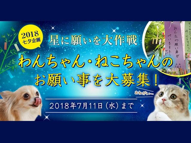 もうすぐ七夕!愛猫と愛犬の願いを神社へ奉納してくれる「星に願いを大作戦」