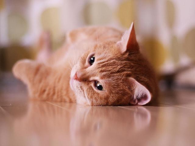 愛猫の写真も募集中!みんなで作る「365カレンダー」がエントリー開始