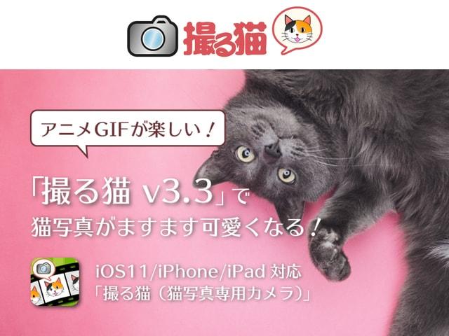 ネコ専用のカメラアプリ「撮る猫」にアニメGIF作成機能が追加