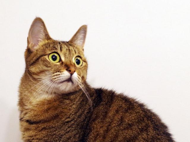 猫の飼い主さん向けセミナー「日頃から備える猫のための防災」 9月に開催