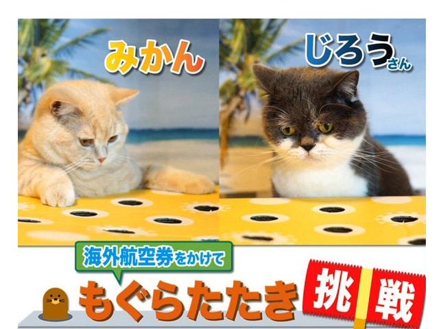 SNSで人気のネコ「みかんとじろうさん」がモグラたたきに挑戦