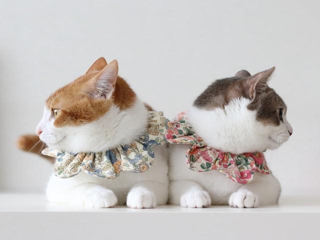 スター猫の作品が共演する大規模イベント「ねこ休み展」7/27〜本祭を開催
