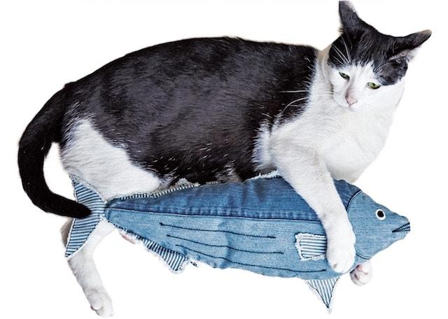カツオ型の猫キッカーを抱く猫