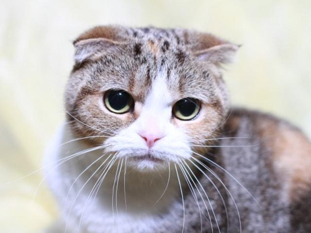 ペットショップにいる猫のイメージ写真
