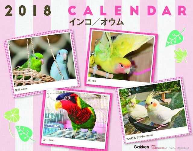 365カレンダー、鳥バージョン