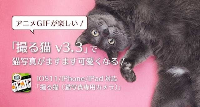 猫専用カメラアプリ「撮る猫」のアニメGIF生成機能