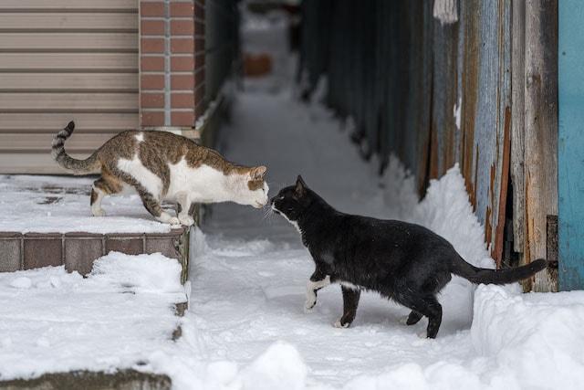 北海道の雪国で仲良くキスをする猫たち by ゆきねこ