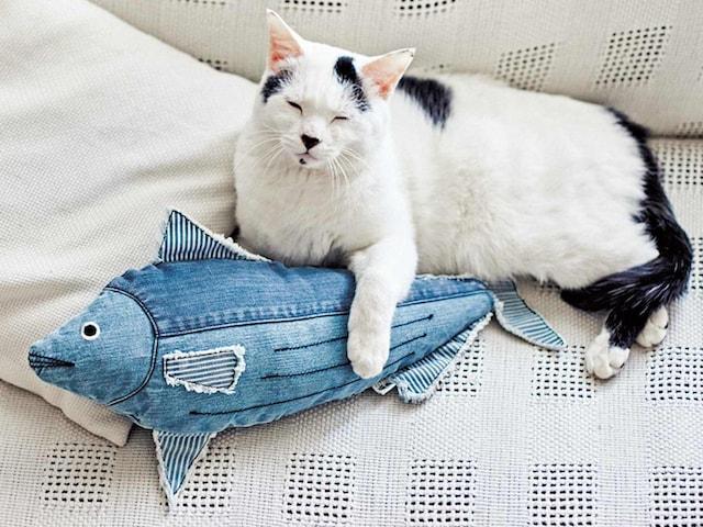 デニムカツオと添い寝する猫