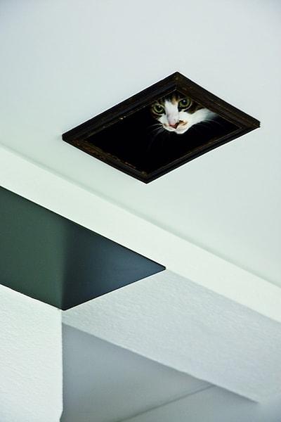 天井のネコ専用通路から様子をうかがう猫 by リノベーション事例