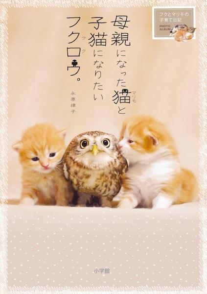 写真集「母親になった猫(マリモ)と子猫になりたいフクロウ(フク)。~フクとマリモの子育て日記~」