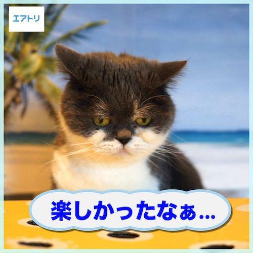 人気猫「みかんとじろうさん」のじろう