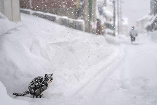 雪が降り積もる中で佇む猫 by ゆきねこ