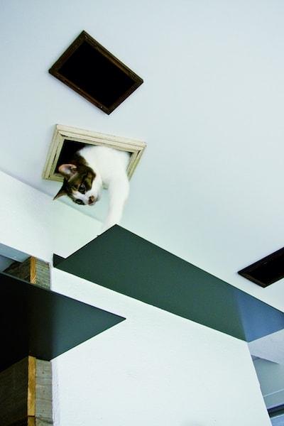 天井のネコ専用通路から出てくる猫 by リノベーション事例
