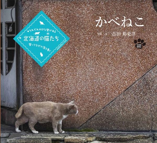 猫の写真集「かべねこ」の表紙