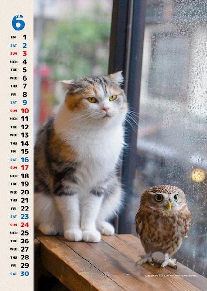 フクとマリモの写真カレンダー