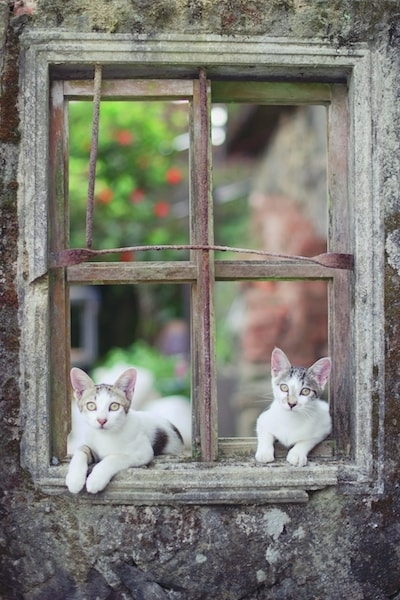 窓枠で寝そべる台湾の猫 by ねこ写真家・関由香