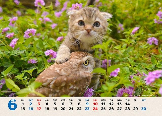 フクとマリモの赤ちゃん写真カレンダー