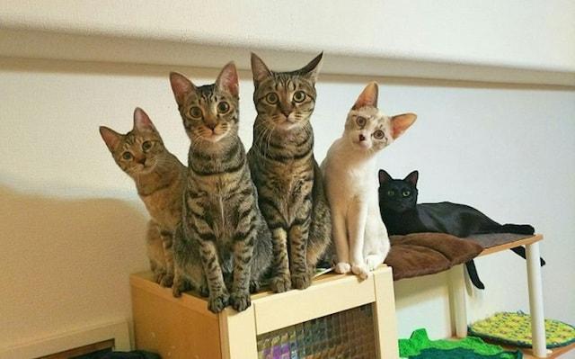 保護猫たちの写真 by 命をつないだ♡ワンニャン写真・動画コンテスト