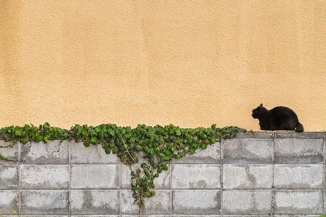 壁際に佇む猫 by かべねこ