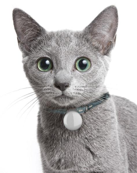 猫トイレ「ペットケアモニター」用の個体識別バッジを付けた猫
