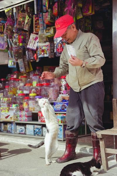 おじさんにじゃれる台湾の猫 by ねこ写真家・関由香