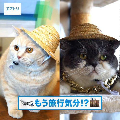 麦わら帽子を被る人気猫「みかんとじろうさん」