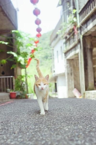 台湾の通りを歩く猫 by ねこ写真家・関由香